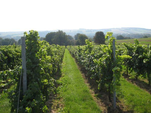 Wein und Sekt vom Weinbauer Triebe